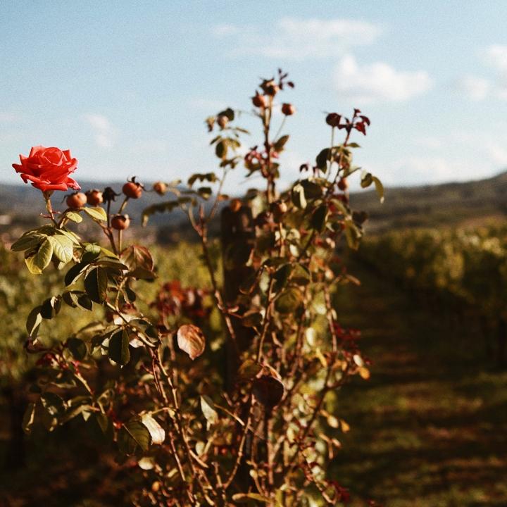 wino16.jpg